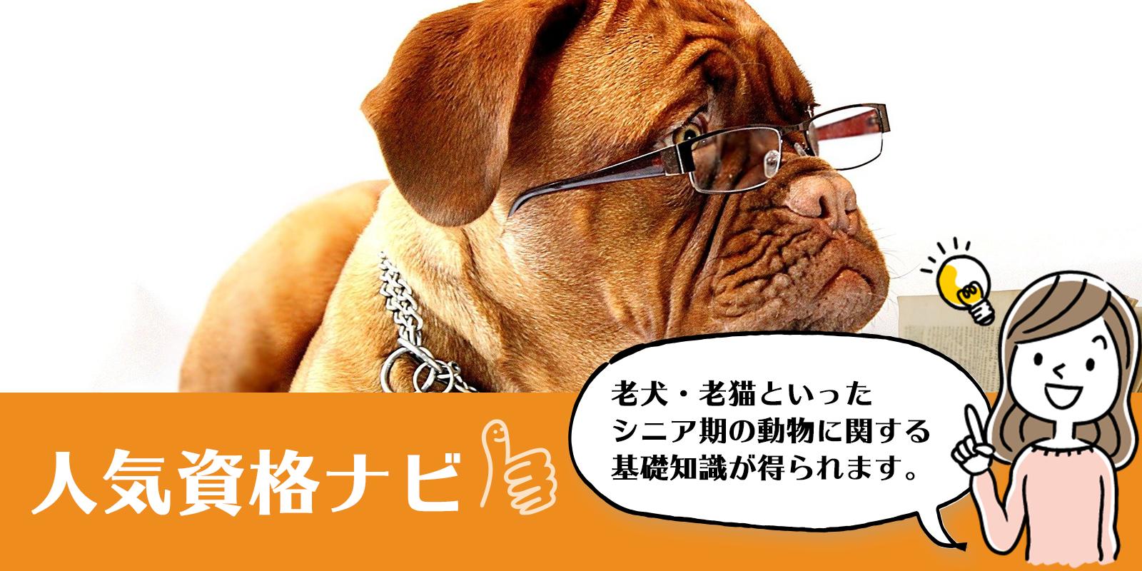動物介護資格のアイキャッチ画像