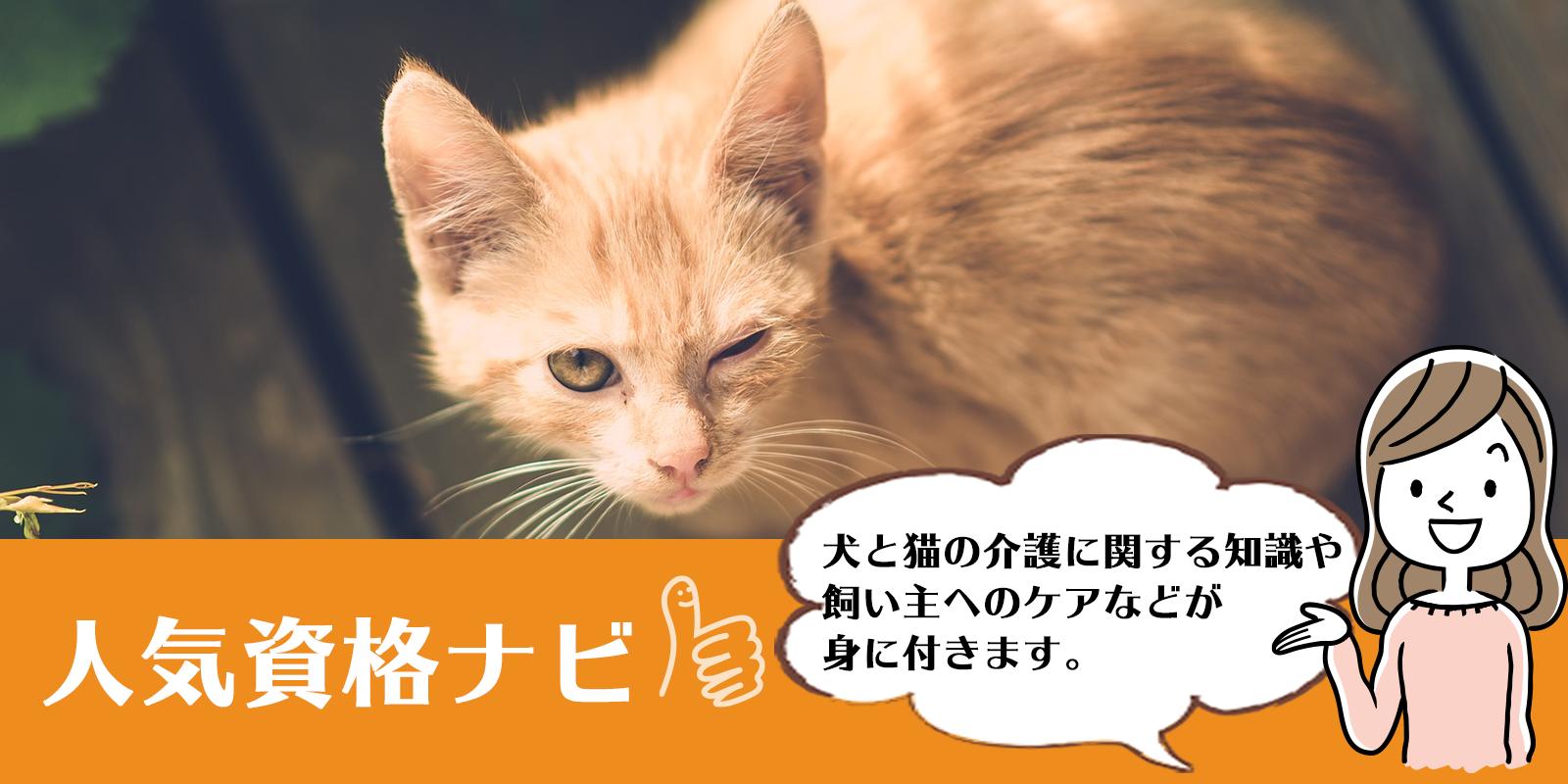 犬猫介護アドバイザー資格のアイキャッチ画像