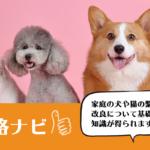 犬・猫ペットブリーダー資格