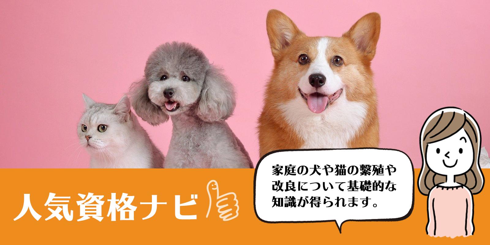 犬・猫ペットブリーダー資格のアイキャッチ画像